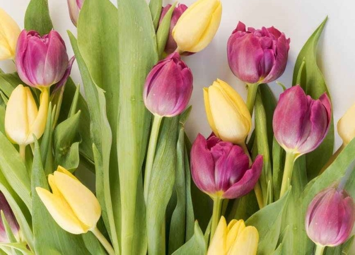 Spring Things… Make the Most Out of theSeason