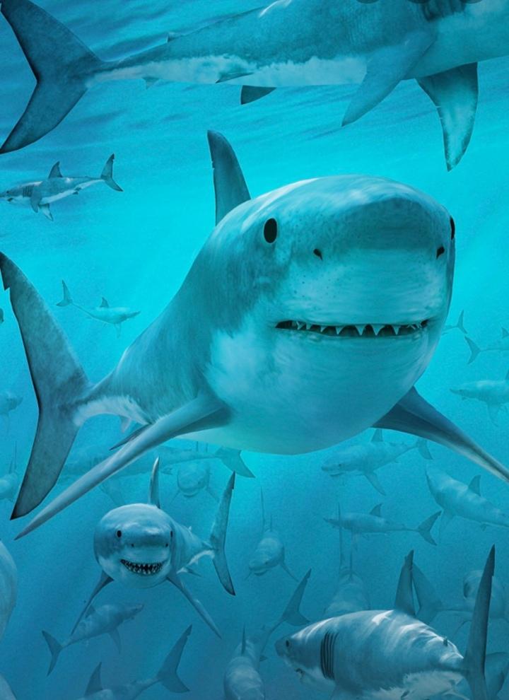 Shark Week DuringQuarantine