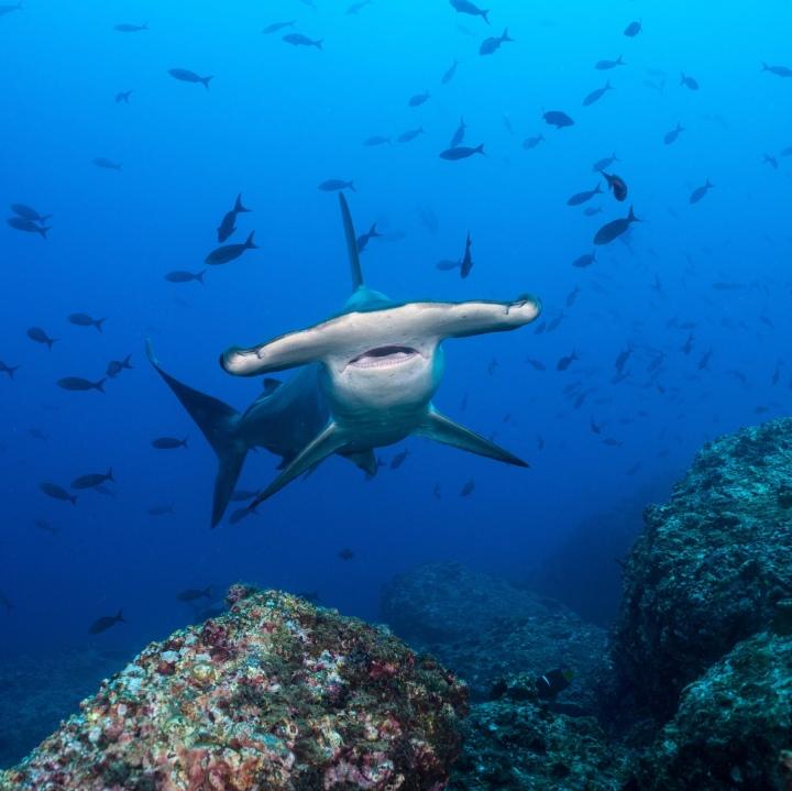Celebrate Shark Week
